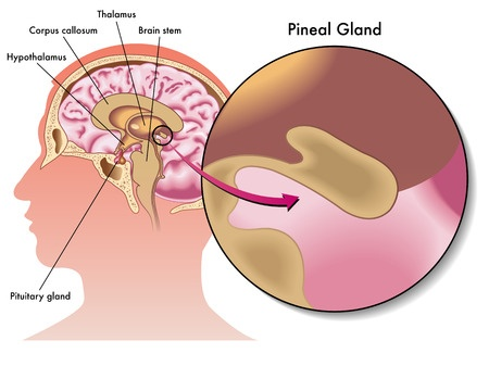 third eye – pineal gland activation —, Sphenoid